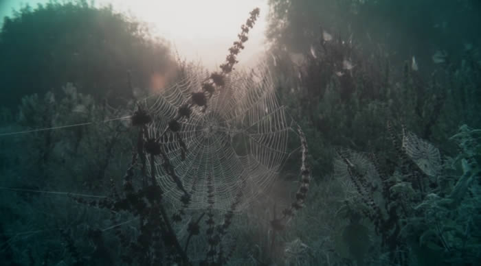 'Grantchester Meadows', vídeo de Pink Floyd