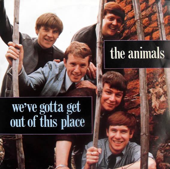 animals--12-10-13